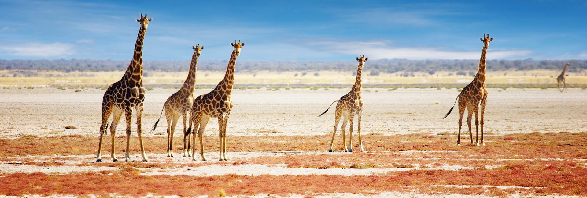 namibian discovery