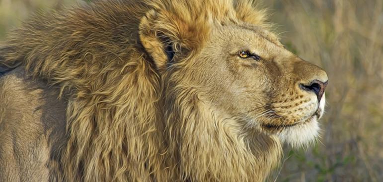 Insider Advice for Your Next Safari Adventure