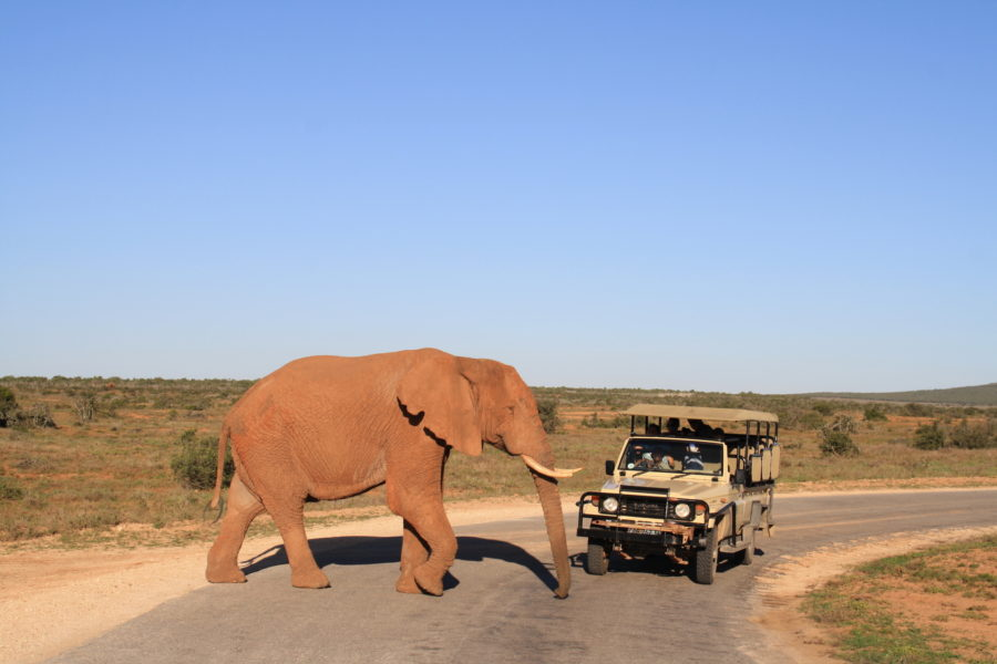 Where to Go for a Safari Depending on the Time of Year