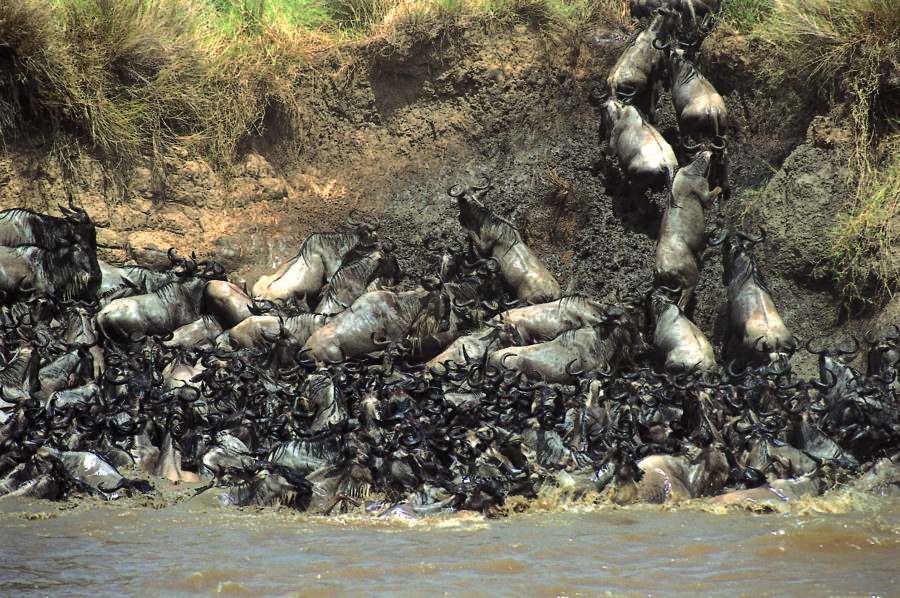 The Greatest Show on Earth: The Great Migration