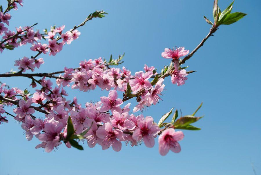 These Non-European Destinations Are True Spring Paradise