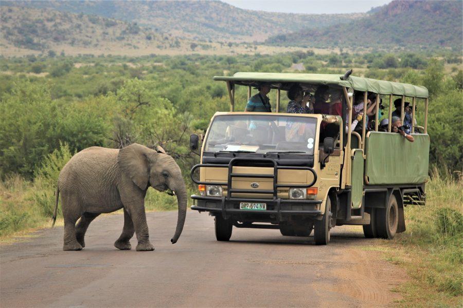 How to choose safari destination travel in Africa?