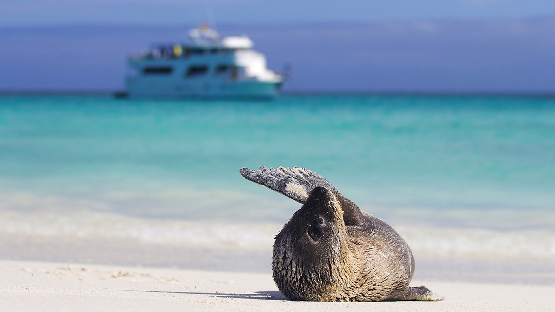 Highlights Of Quito Amp Galapagos Cruise Indus Travel