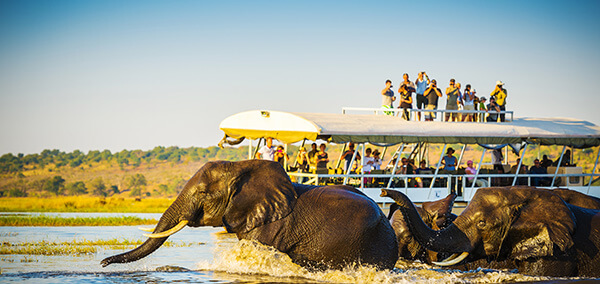 A Journey Through Botswana and Victoria Falls