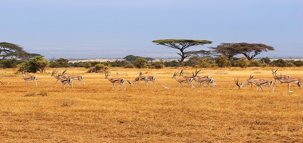 Captivating Kenya with Victoria Falls and Cape Town