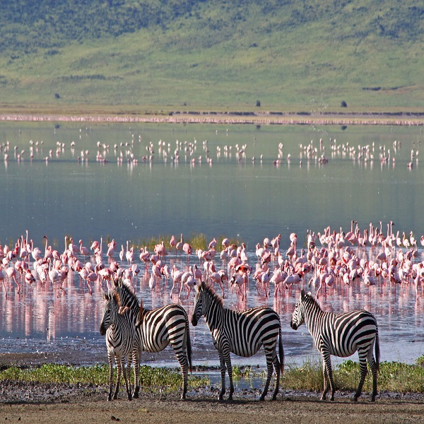 Captivating Kenya