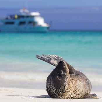 Highlights of Quito & Galapagos Cruise