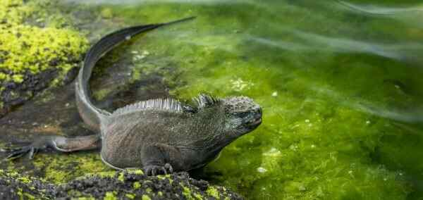 Essential Guayaquil and Galapagos Islands