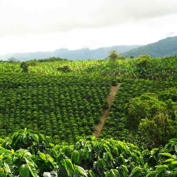 Picturesque Colombia And The Coffee Region