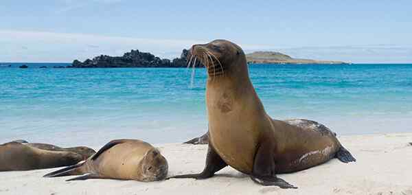 Highlights Of Quito & Galapagos Islands