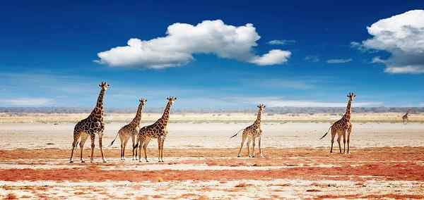 Highlights of Namibia, Botswana & Zimbabwe