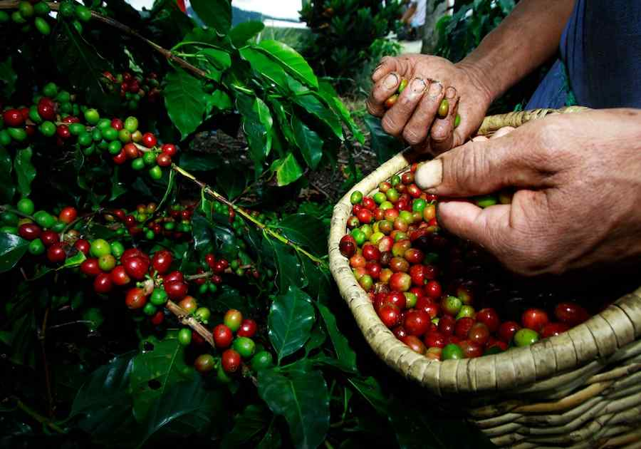 Best of Colombia & The Coffee Triangle 3