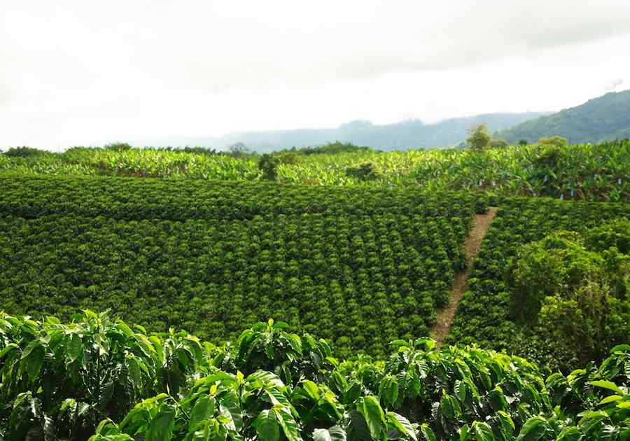 Best of Colombia & The Coffee Triangle 4