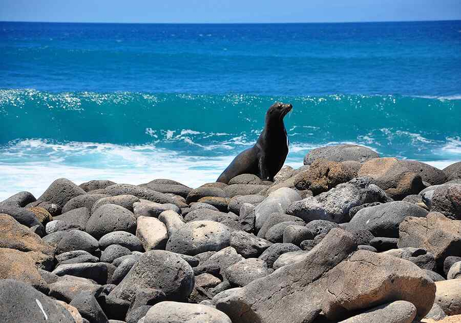Best Of Ecuador & Galapagos Islands Ex USA