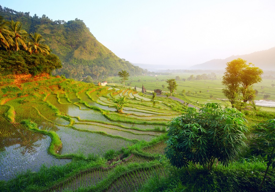 Splendors of Bali